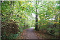 TQ6532 : Sussex Border Path, Bewl Woods by Nigel Chadwick