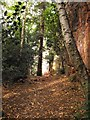 SJ3819 : Nesscliffe Hill country park by Penny Mayes