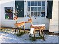 SZ1992 : Reindeer at Steamer Point : Week 51