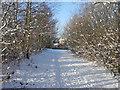 SD7707 : Path To Hollybank Street by David Dixon