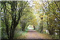 TQ4535 : Autumnal Forest Way by N Chadwick