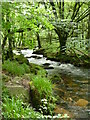 SX2268 : Small stream flowing into River Fowey by Lewis Potter