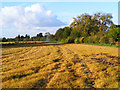 SP7702 : Farmland, Bledlow by Andrew Smith