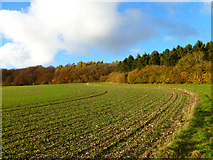 SP8303 : Farmland, Princes Risborough by Andrew Smith