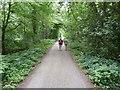 SJ6880 : Along Sack Lane, Arley Green , Cheshire by Anthony O'Neil