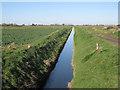 TF3805 : Drain off Plash Drove by Hugh Venables