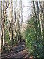 TQ4164 : Footpath in Padmall Wood by Mike Quinn