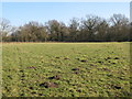 TQ4166 : Open space with molehills at the north of Barnet Wood by Mike Quinn