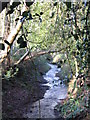 TQ4166 : The River Ravensbourne in the north of Barnet Wood (2) by Mike Quinn