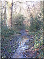 TQ4166 : Footpath in the north of Barnet Wood by Mike Quinn