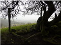 SJ9780 : Hawthorn roots by Peter Barr