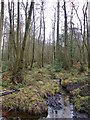 TQ0083 : Wet alder woodland, close to Black Park Lake by Stefan Czapski