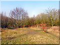 SD7200 : Bridgewater Park by David Dixon