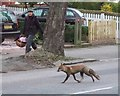 TQ3273 : Fox, Tulse Hill by Derek Harper