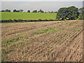 SP6639 : Stubble field near Parkfields by Trevor Rickard