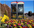 D4002 : Floral telephone boxes, Larne : Week 12