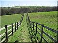 SK3174 : Footpath from Moorhall towards Grange Wood : Week 14