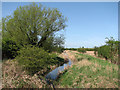 TL5159 : Quy Water on Teversham Fen by John Sutton