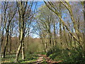 TR1050 : Public footpath through Denge Wood by Oast House Archive