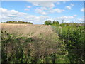 SU8087 : Strip of game cover, Hutton's Farm by David Hawgood