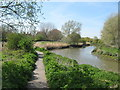 TR3358 : Stour Valley Walk and River Stour by David Anstiss