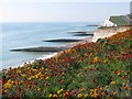 TQ3801 : Wallflowers at Saltdean by Peter Whitcomb