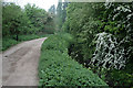 SK4833 : Path with dense White Deadnettle and new Hawthorn blossom by David Lally