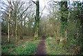 TQ0234 : Wey South Path, Fir Tree Copse by N Chadwick