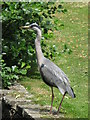 TQ3769 : Heron at the northern end of Kelsey Park by Mike Quinn