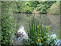 TQ3768 : The lake in Kelsey Park by Mike Quinn
