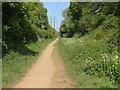 SU8949 : Bridleway, Tongham by Alan Hunt