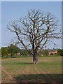 SP2289 : Field and dead tree by Castle Lane by Andrew Hill