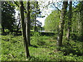 SJ8772 : Henbury Hall ornamental lake by Peter Turner