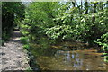 SU0394 : River Thames near Ashton Keynes by Philip Halling