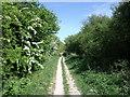 TL1229 : Icknield Way bridlepath by John Reeves