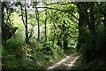 SX1173 : Blisland: tree-lined track by Martin Bodman