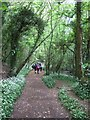 SX8371 : Path in Broadridge Wood by David Smith