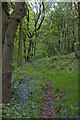 SD5910 : A footpath through Arley Wood by Ian Greig