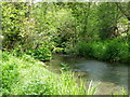 ST9430 : Fonthill Stream, Tisbury by Miss Steel