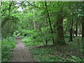 SP3059 : Path through Oakley Wood by Alan Murray-Rust