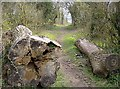 SU4950 : Fallen tree off the Harrow Way by Graham Horn
