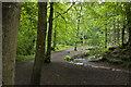 SD6206 : The path through Borsdane Wood by Ian Greig