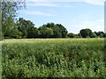 TG0526 : Fields next to Foulsham Road by Adrian Cable