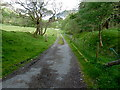 NN5824 : Glen Ogle Trail - northwards by Anthony O'Neil