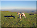 SO7639 : Hound on Broad Down by Trevor Rickard