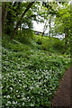 NN8522 : Ramsons by Martin Addison