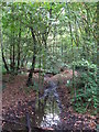 TQ4468 : A tributary of the Kyd Brook in Petts Wood (2) by Mike Quinn
