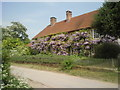TQ1116 : Wisteria on cottage at Warminghurst by Marathon