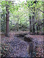 TQ4466 : The Kyd Brook - Main Branch, in Roundabout Wood (5) by Mike Quinn