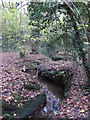 TQ4466 : The Kyd Brook - Main Branch, in Roundabout Wood (8) by Mike Quinn